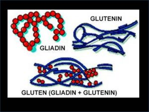 The Science of Gluten